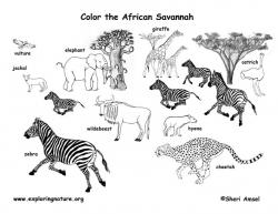 Savannah clipart grassland animal