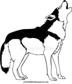 Coyote clipart drawn