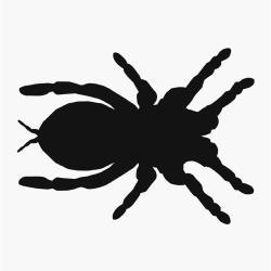 Tarantula clipart spider