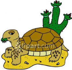 Turtoise clipart desert tortoise