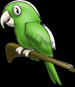 Budgerigars clipart parrot bird
