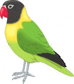 Pets clipart pet bird