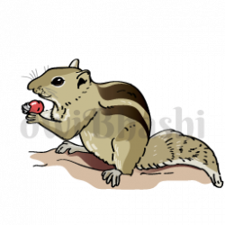 Indian clipart squirrel