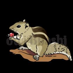 Indian clipart squirrel