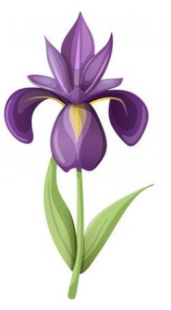 Pub clipart iris