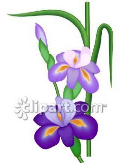 Iris clipart cartoon