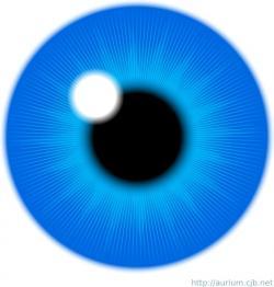 Iris clipart eye vector