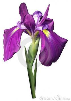 Purple Flower clipart purple iris