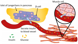 Womb clipart stem cell