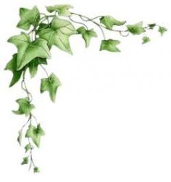 Drawn ivy border