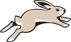 Hare clipart jackrabbit