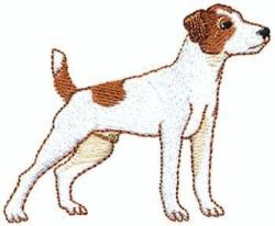 Jack Russell Terrier clipart animal