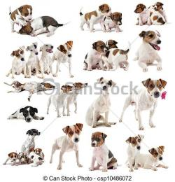 Jack Russell Terrier clipart many dog