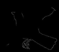 Blackbird clipart transparent
