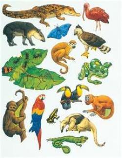 Cameleon clipart rainforest habitat