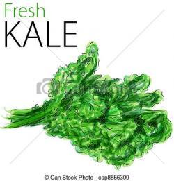 Kale clipart vector