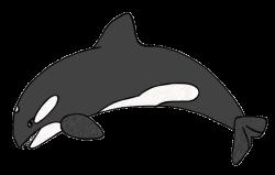 Leopard Seal clipart orca