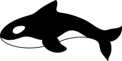 Orca clipart black and white