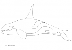 Orca clipart coloring page