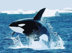 Orca clipart shamu