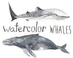 Beluga Whale clipart gray whale