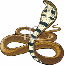 Cobra clipart king cobra