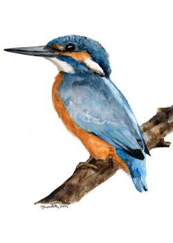Kingfisher clipart watercolor