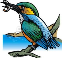 Kingfisher clipart kingfisher bird
