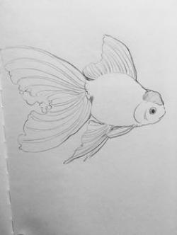 Drawn goldfish live
