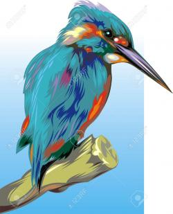 Kingfisher clipart drawing