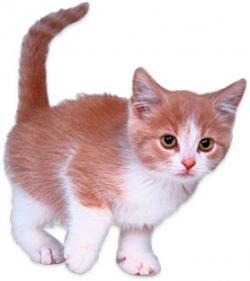 KITTENS clipart animation