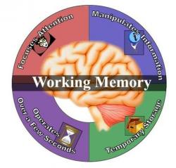Mind clipart working memory