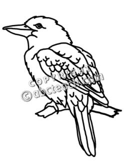 Kookaburra clipart black and white