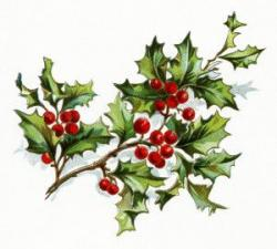 Holley clipart holly branch