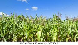 Korn clipart corn farm