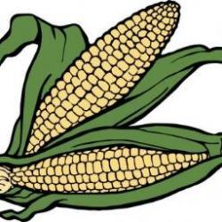 Korn clipart corn on cob