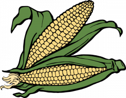 Korn clipart harvesting crop
