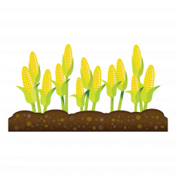 Feilds clipart crop field