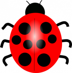 Beelte clipart red bug