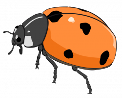 Lady Beetle clipart bettle