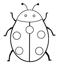 Drawn ladybug outline