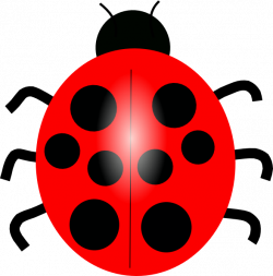 Lady Beetle clipart red ladybug
