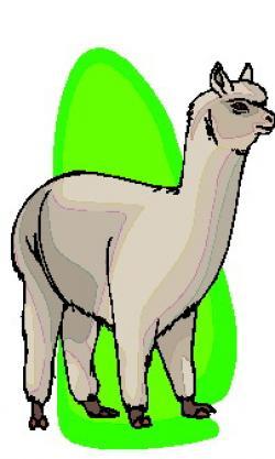 Lama clipart animated