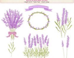 Lilac clipart lavender