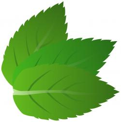 Herbs clipart mint leaves