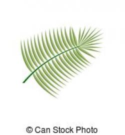 Coconut clipart coconut leaf