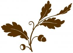 Leaves clipart oak branch
