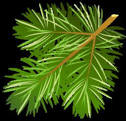 Cone clipart pine needle