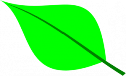 Single clipart green leave