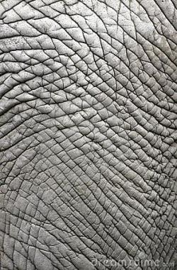 Leather Textures clipart elephant skin